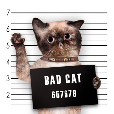 stock-photo-63240397-bad-cat